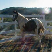 Dontae, Sanctuary horse at FalconRidge